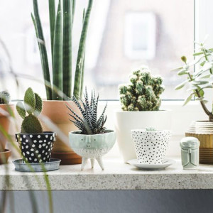succulent obsession.